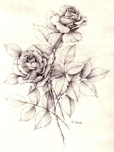 Rosen bleistiftzeichnung  Angela Beck - Ölgemälde, Zeichnungen, Seidenmalerei - Hof